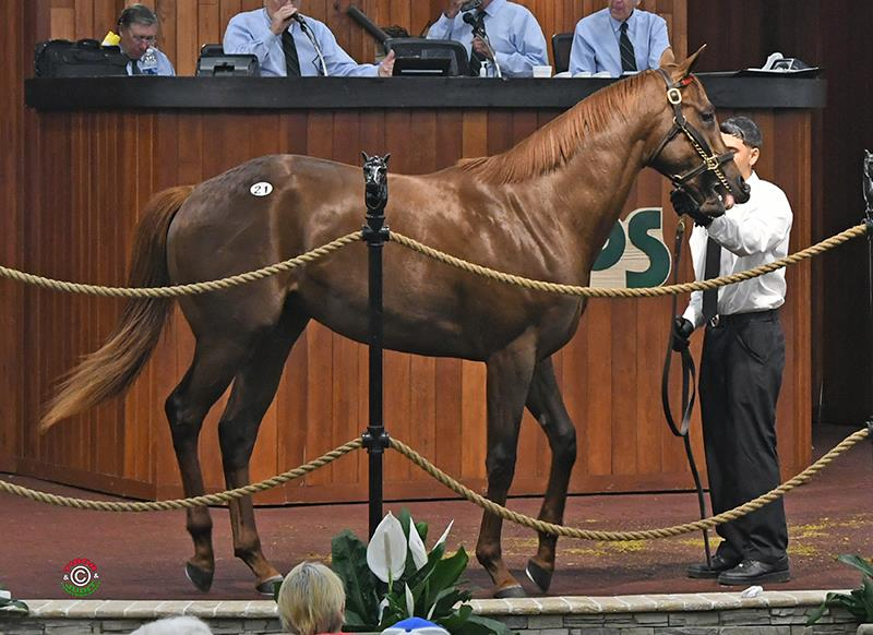 Strong start for Speightster at OBS 2yo sale title=