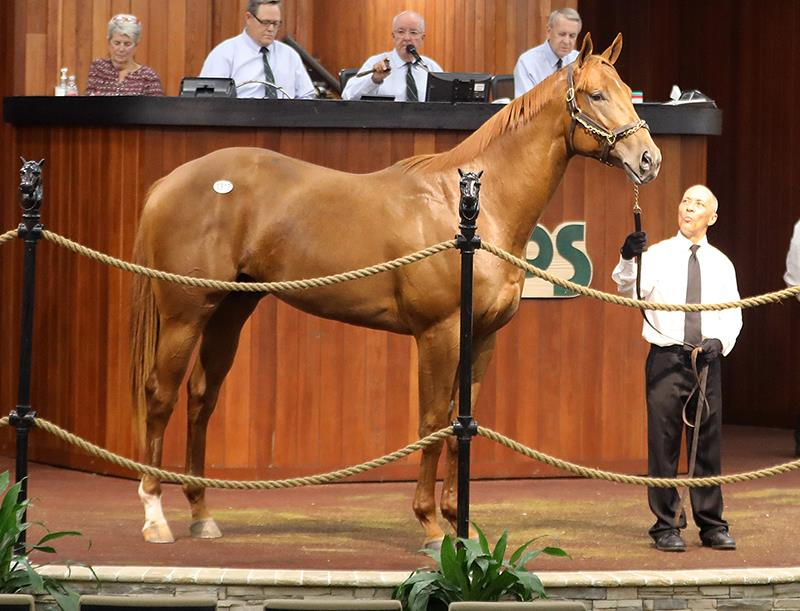 Speightsters $1.1 million colt at the 2020 OBS 2-year-olds in Training sale - photo by Z