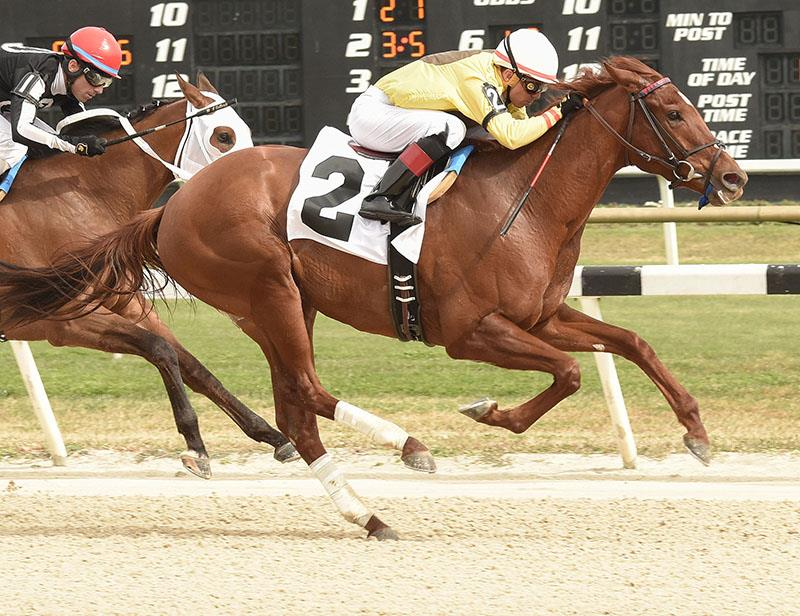 Speightstown's Almond Roca takes $125,000 Gasparilla S. for second straight stakes win title=