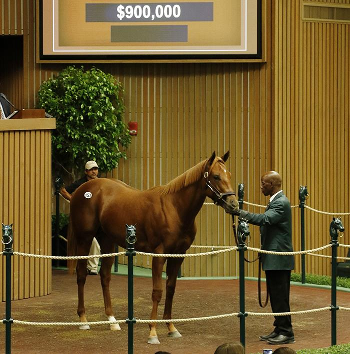 Speightstown's $900,000 colt, hip No. 157, at the 2017 Keeneland September Yearling sale - photo by Z
