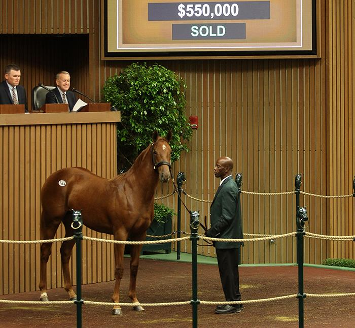 Speightstown's $550,000 filly, hip No. 784, at the 2017 Keeneland September Yearling sale - photo by Z
