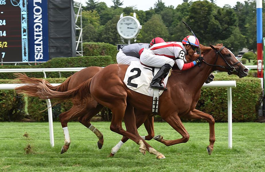 Speightstown filly sharp in Saratoga debut title=
