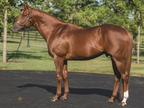 Speightstown's Sharing named top Midlantic-bred of 2019 title=