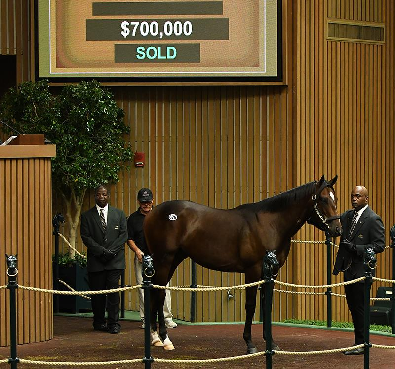 Speightstown's hip No. 679 in the auction ring at the Keeneland September Yearling sale – Mathea Kelley photo