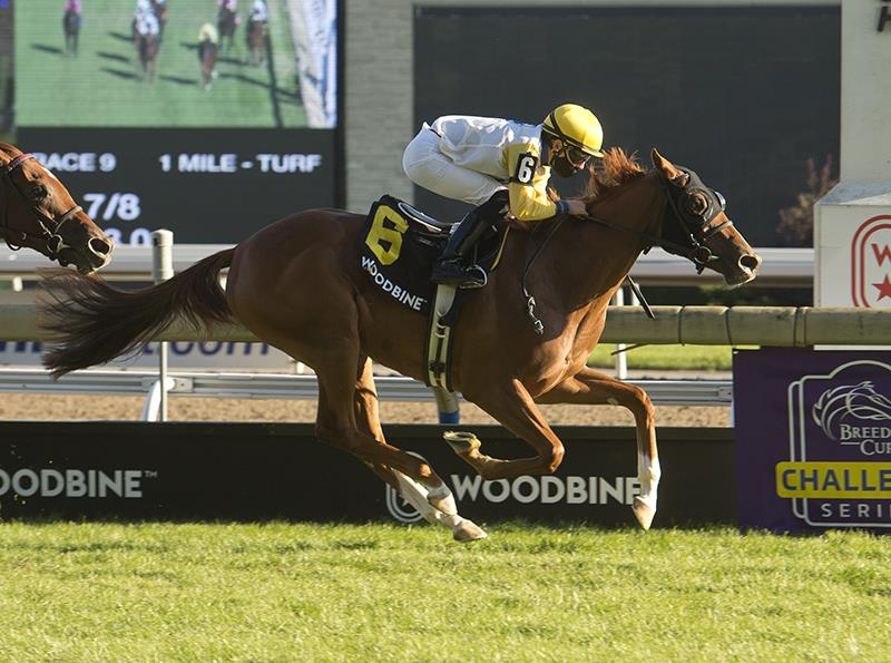 Lady Speightspeare wins Natalma S. (G1), earns trip to Breeders' Cup title=