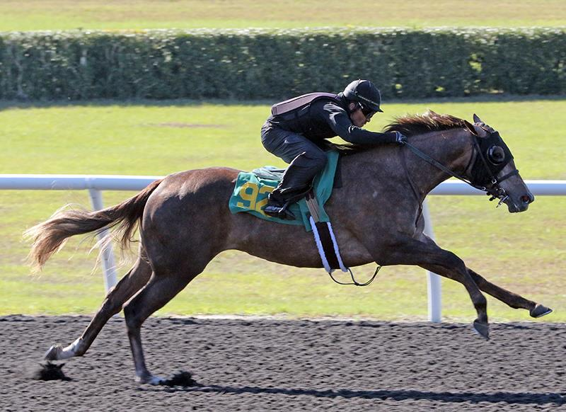 $650,000 Speightstown filly among top sellers Tuesday at OBS title=