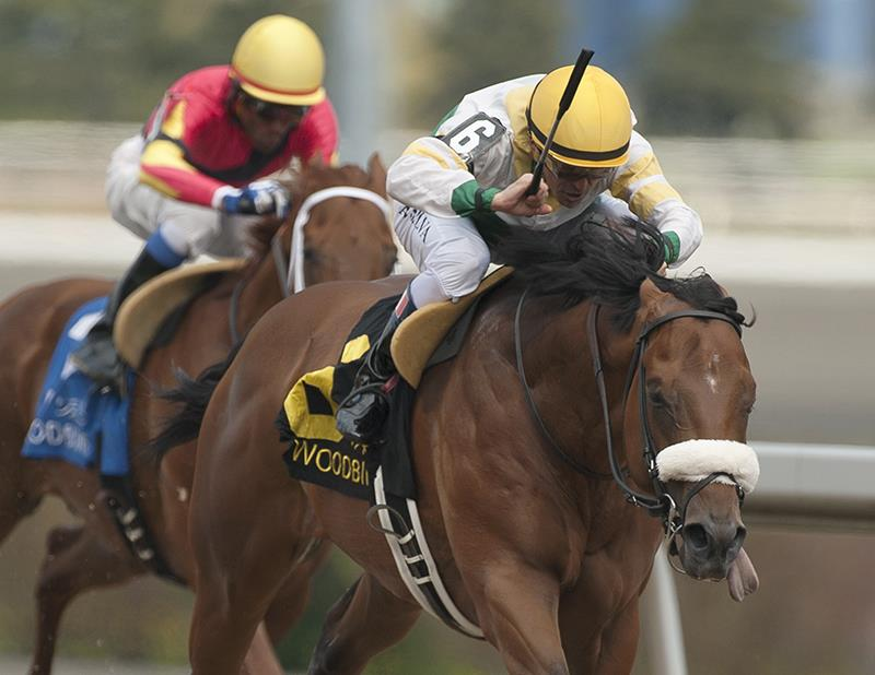 Speightstown colt towers over rivals in Queenston S. win title=