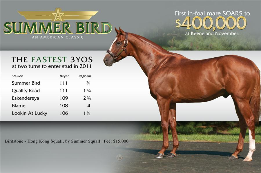 $400K mare in foal to Summer Bird at Kee title=