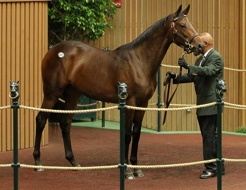 Super Saver's $435,000 filly, hip No. 512, at the 2017 Keeneland September Yearling sale - photo by Z