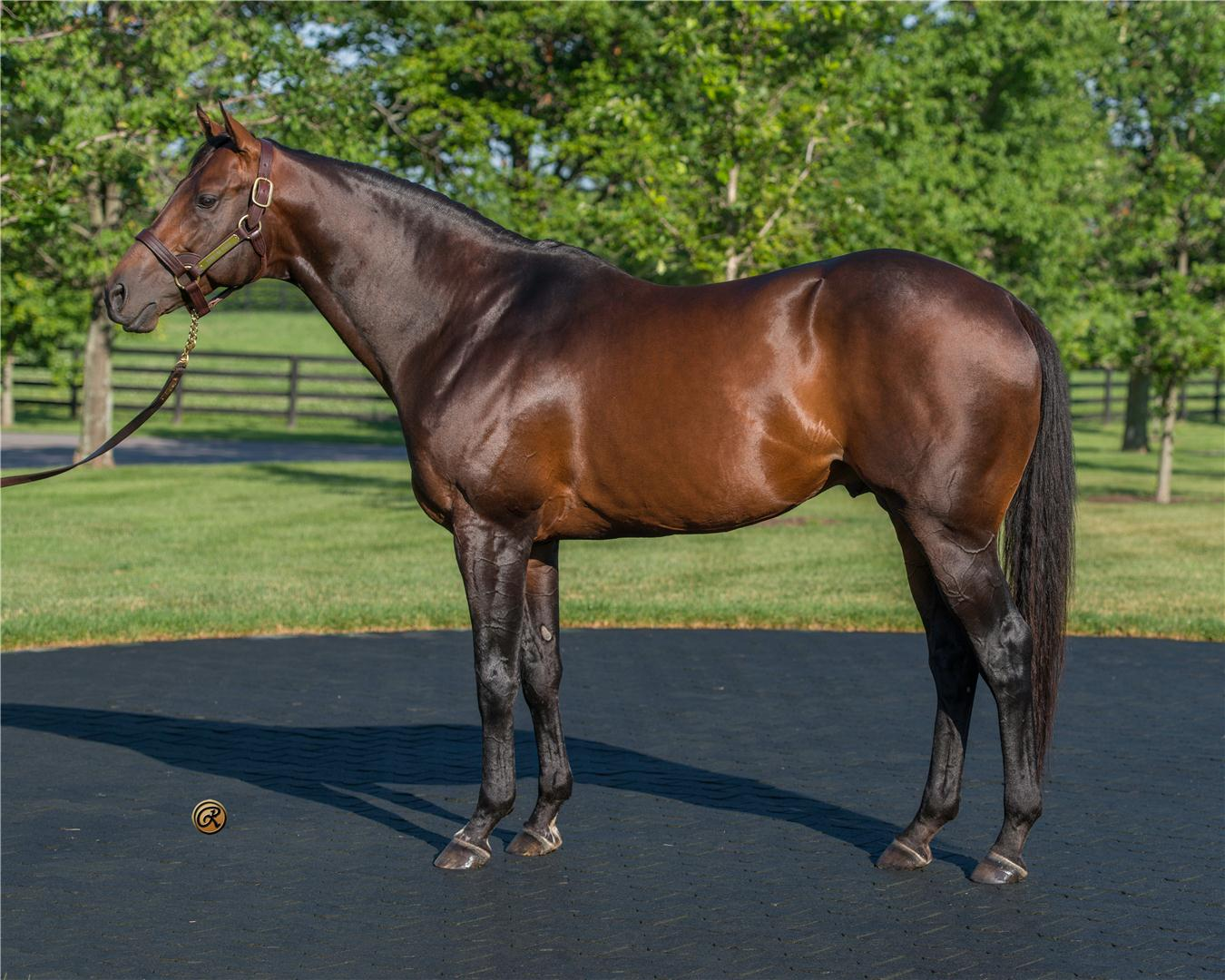 WinStar Farm sets 2015 stud fees