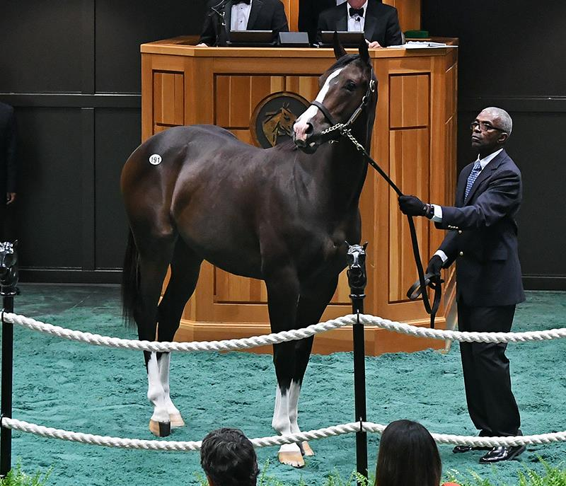 Tuesday F-T Saratoga Sale features $450K Tiznow colt title=