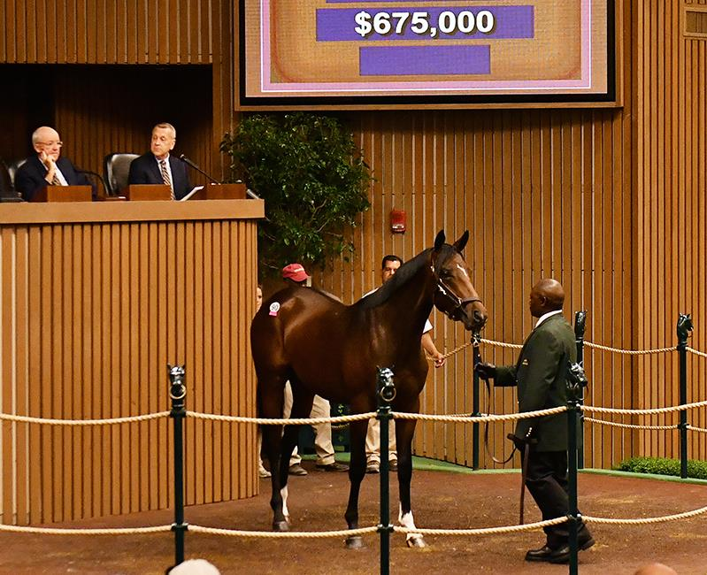 Tiznow now yearlings average $400K at Keeneland September day 1 title=