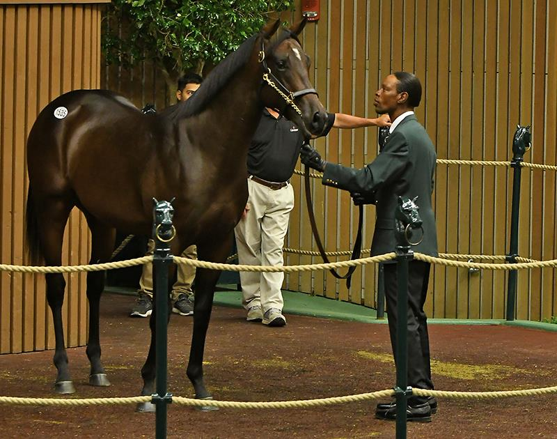 Tourist's hip No. 1535 in the Keeneland Sales ring - Tibor & Judit photography