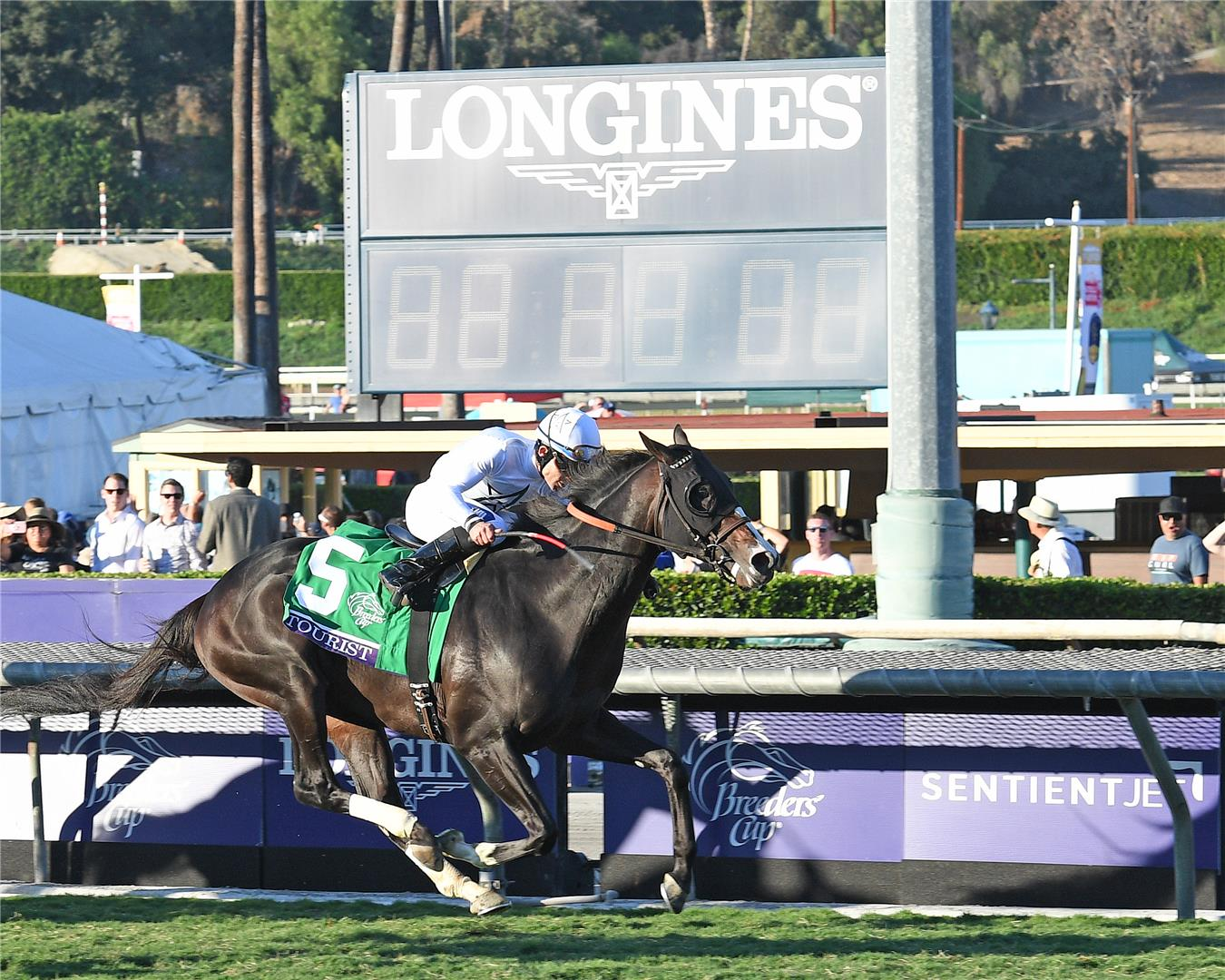 Tourist tops Turf Male Eclipse Award nominations title=