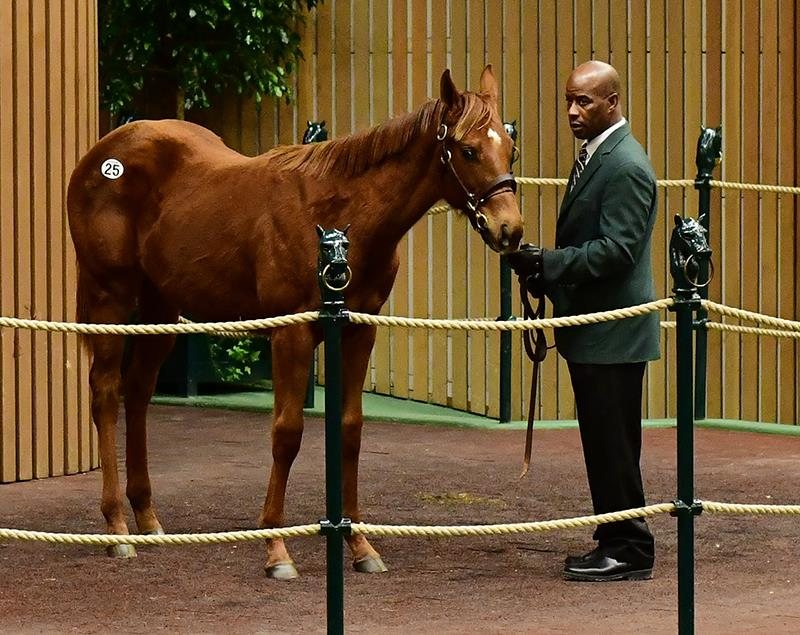 Exaggerator's first yearling of 2019 hammers for $125,000 at Keeneland title=