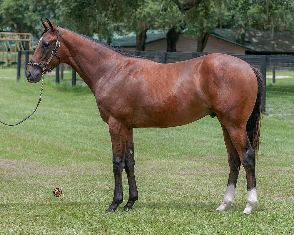Paynter colt near top at OBS August Yearling sale title=