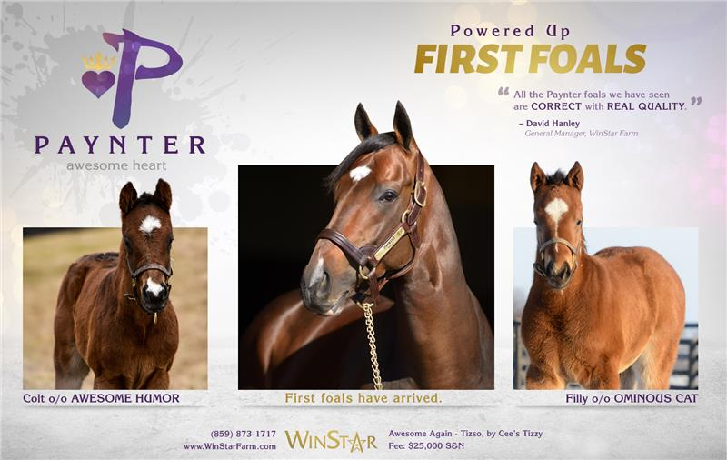 154115-Paynter-half-TDN-03-proof