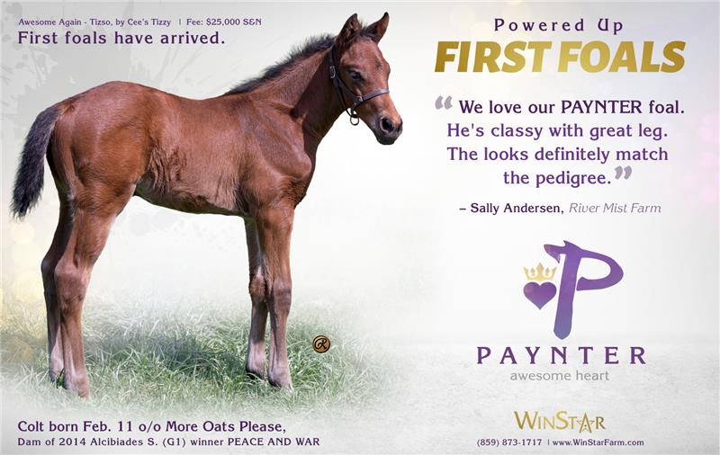 154260-Paynter-half-TDN-proof