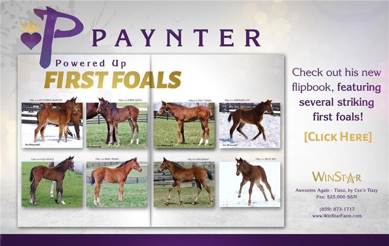 154751-Paynter-half-TDN-proof3 (2)