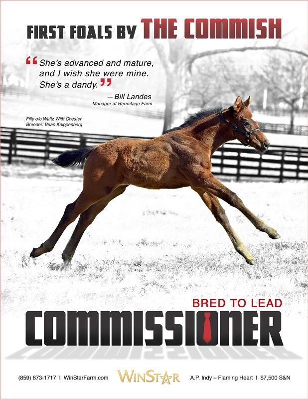 173172-Commissioner-TDN-proof-2