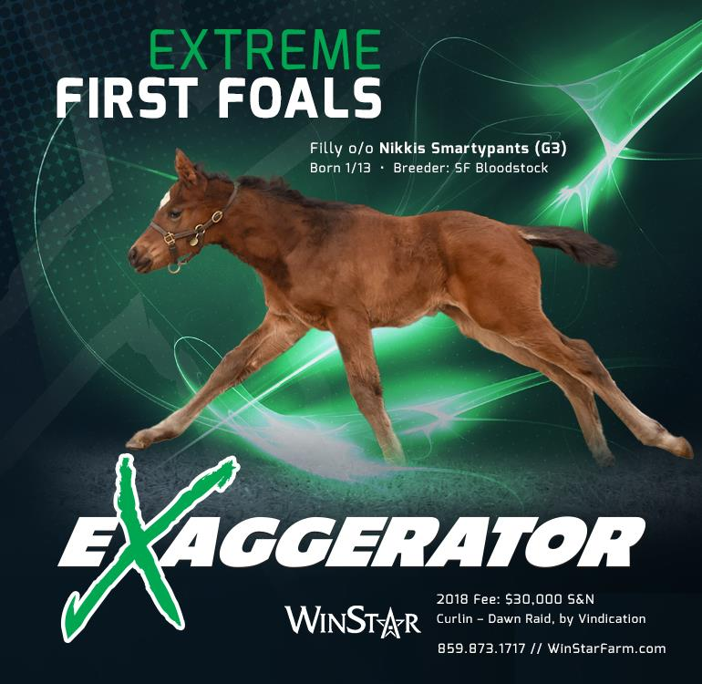 183108-Exaggerator-FirstFoals-cvrBanner-TDN