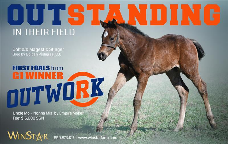 183511-Outwork-foals-half-TDN