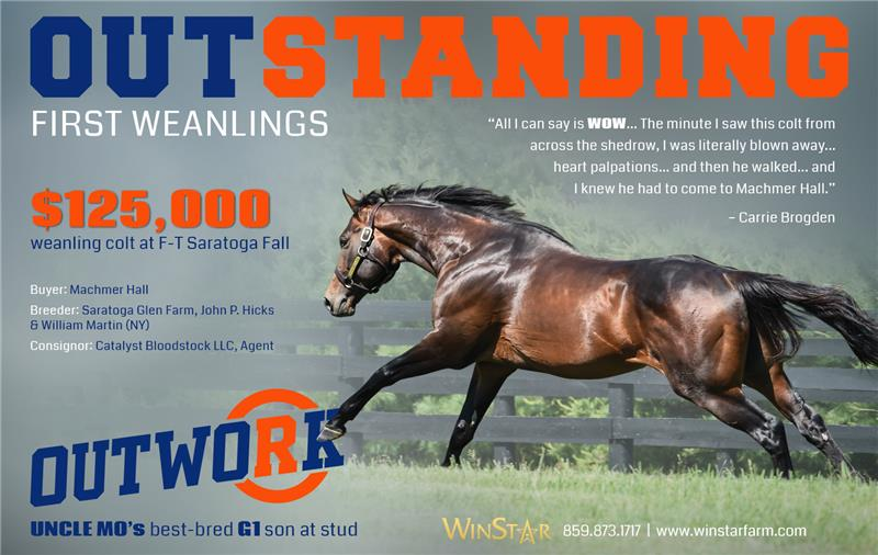 188321-Outwork-weanlings-half-TDN