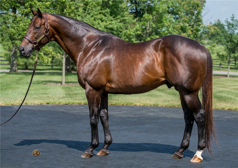 Congrats - Champion Sire by A.P. Indy