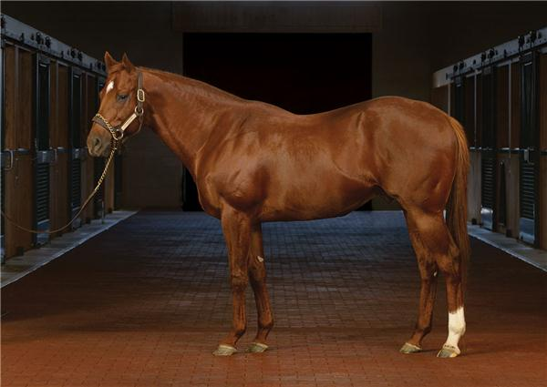 Speightstown The Hottest Sire In Town