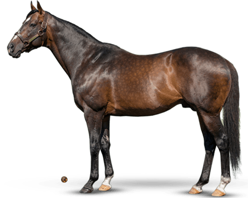Artie Schiller - Quality Sire - Gr. 1 Horses On Every Surface
