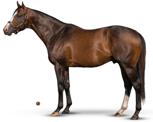 Bodemeister - First-crop Sire of a Kentucky Derby winner