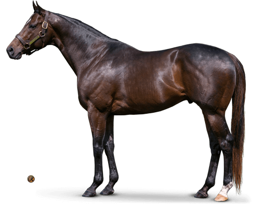 Fed Biz - Bred to Be a Sire