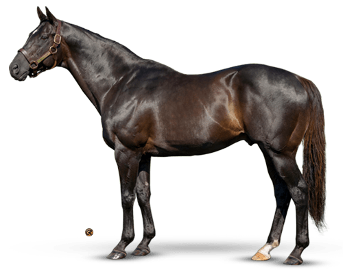 More Than Ready - The International Sire