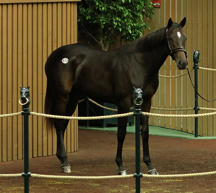 Pioneerof the nile winstar farm 672 at the 2017 keeneland september yearling sale photo by z fandeluxe Gallery