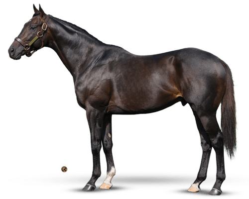 Revolutionary - Striking Individual, Deep Bloodline, Classic Racehorse