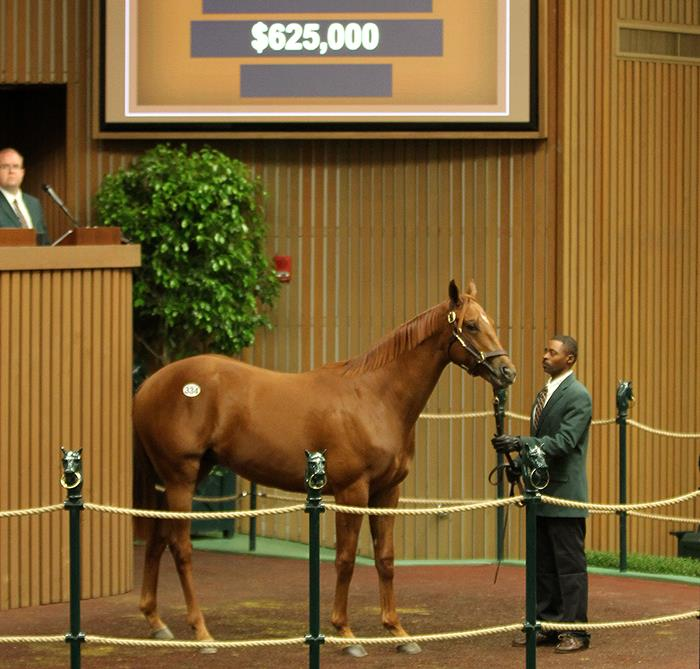 Super saver winstar farm 334 at the 2017 keeneland september yearling sale photo by z fandeluxe Gallery