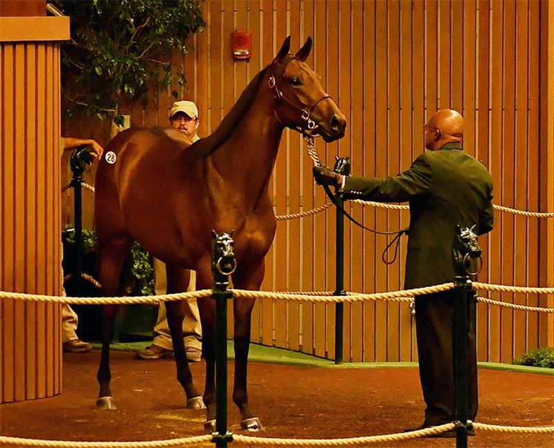Super saver winstar farm super savers 200k filly hip 28 at the 2016 keeneland september yearling sale fandeluxe Gallery