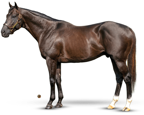 Take Charge Indy - World's Most Exciting G1 Dirt Pedigree