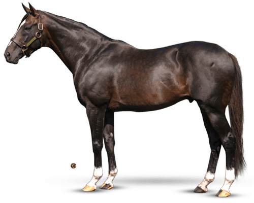 Tiznow - The Big Horse Sire