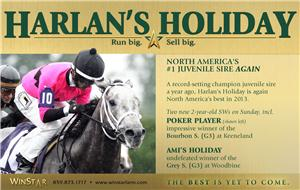 139140-HarlansHoliday-half-TDN-proof