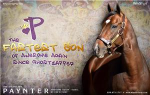 140498-Paynter-half-TDN-proof