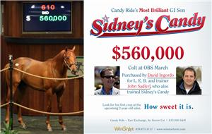 154730-SidneysCandy-half-TDN-proof