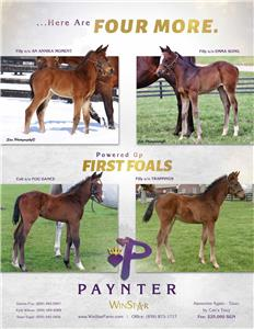 155275-Paynter-TDN-proof